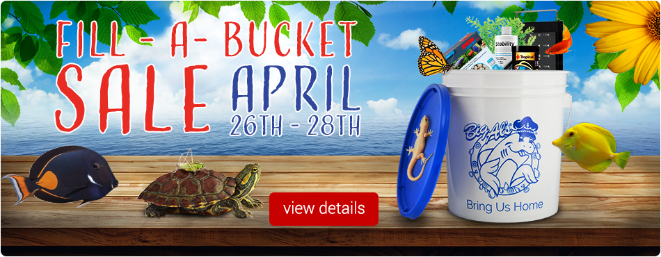 Fill-A-Bucket Sale Spring 2019